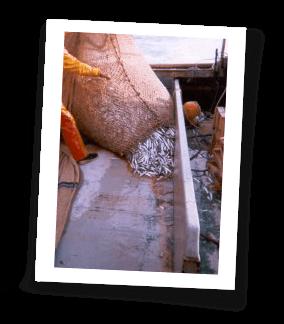 Pêche au filet tournant - pont chalutier