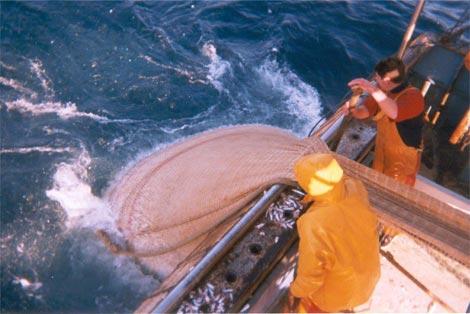 Remonte de filet - bâteau de pêche - Capitaine Nat'